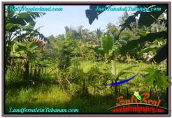 FOR SALE Exotic PROPERTY 8,100 m2 LAND IN TABANAN TJTB329