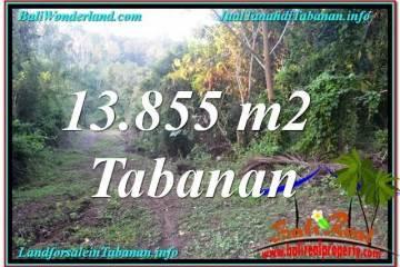 LAND FOR SALE IN TABANAN TJTB335