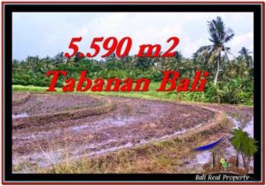 5,590 m2 LAND IN TABANAN BALI FOR SALE TJTB257