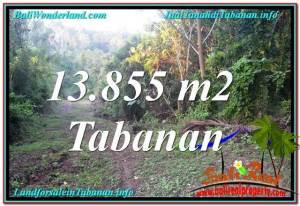 Magnificent 13,855 m2 LAND IN Tabanan Selemadeg FOR SALE TJTB335