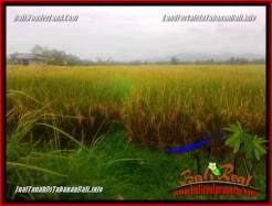 Beautiful LAND IN TABANAN FOR SALE TJTB356