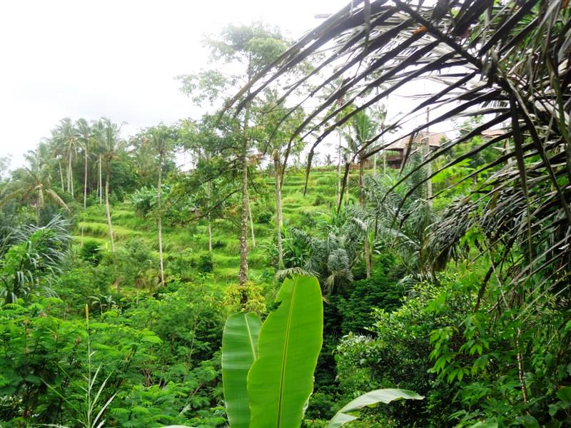 Land for sale in Ubud Bali 120 Ares in Ubud Tegalalang