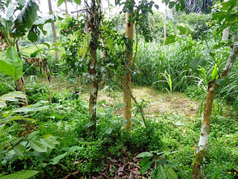 Land for sale in Ubud by the river valley  in Ubud Tegalalang  Bali