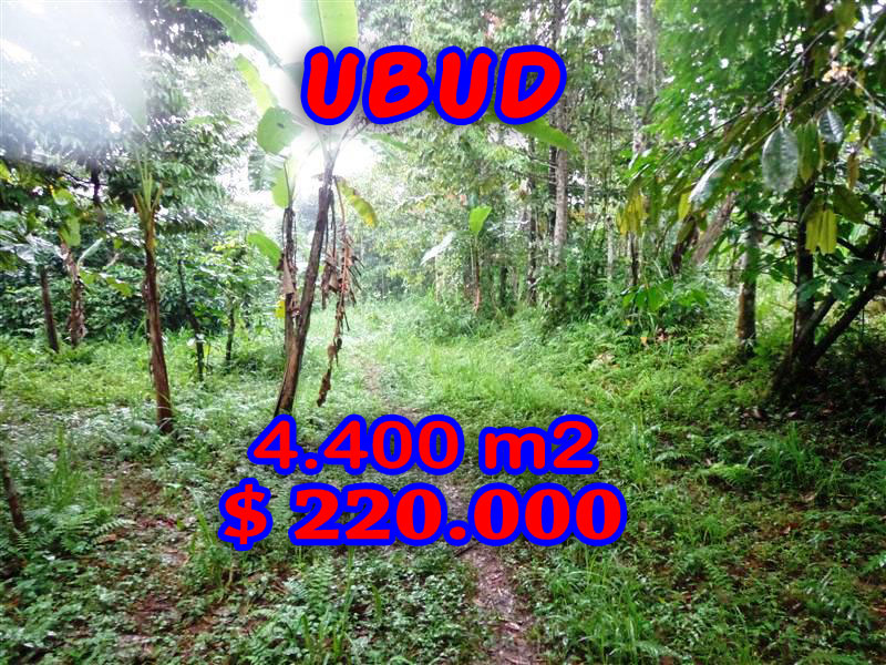 Land for sale in Ubud Bali 4.400 m2 in Ubud Tegalalang