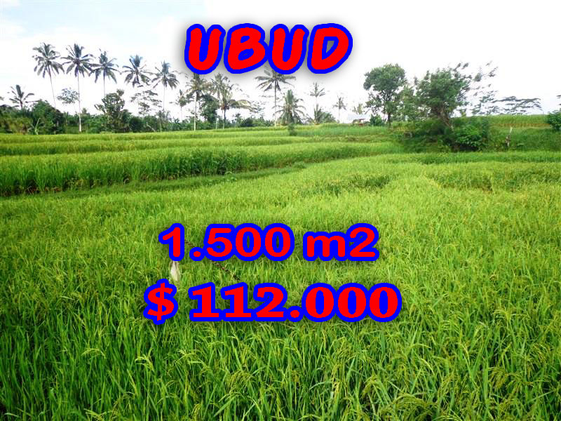 Land in Ubud for sale, Attractive view in Ubud Tegalalang Bali – TJUB242