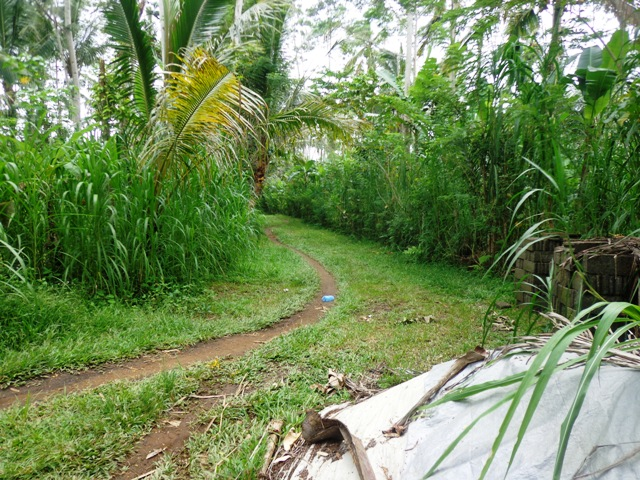 Land for sale in Ubud Bali 6,200 m2 with jungle and river view