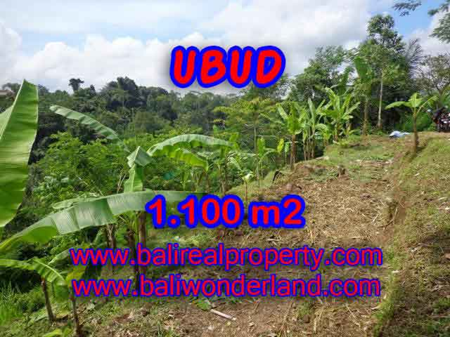 Interesting Land for sale in Ubud Bali, Ricefield view by valley in Ubud Tegalalang– TJUB407