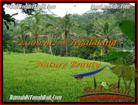 FOR SALE Affordable PROPERTY 2,000 m2 LAND IN UBUD BALI TJUB490
