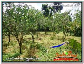 Beautiful 3,600 m2 LAND IN Ubud Tegalalang FOR SALE TJUB599