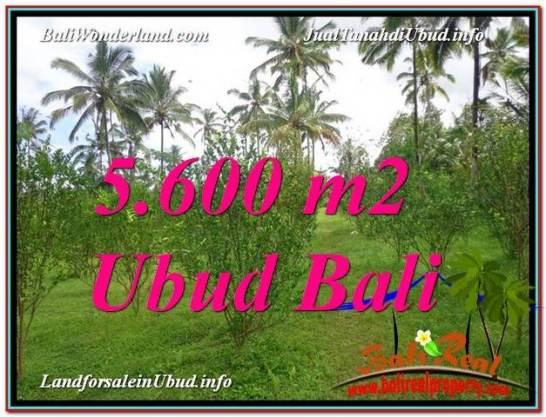 5,600 m2 LAND IN UBUD BALI FOR SALE TJUB609