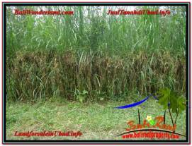 Beautiful PROPERTY 1,800 m2 LAND FOR SALE IN Ubud Tegalalang TJUB610