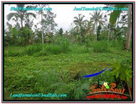 FOR SALE Affordable 1,400 m2 LAND IN UBUD TJUB612