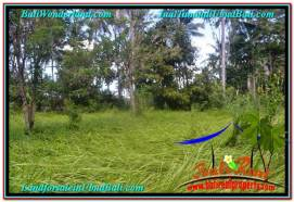 Beautiful PROPERTY LAND SALE IN UBUD TJUB622