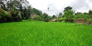 Land for sale in Ubud Bali 2.400 sqm in Ubud Tegalalang