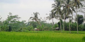 Land in Ubud Bali For sale 17 Ares in Ubud Tegalalang