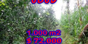 Land for sale in Ubud Bali 1.000 sqm in Ubud Tegalalang