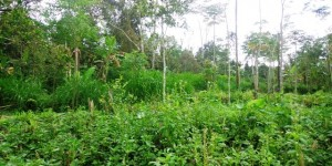 Land for sale in Bali 17 Ares by the river valley  in Ubud Tegalalang