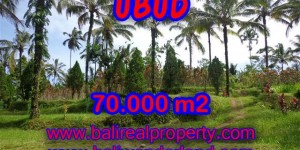 Extraordinary Land for sale in Ubud Bali, mountain and paddy view by the river in Ubud Payangan – TJUB358