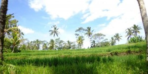 Land for sale in Ubud 3.000 sqm in Ubud Tegalalang with Rice Paddy and River View