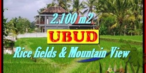 Affordable LAND SALE IN Ubud Tegalalang TJUB423