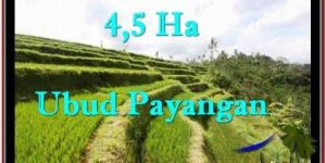 FOR SALE Beautiful LAND IN Ubud Payangan BALI TJUB533