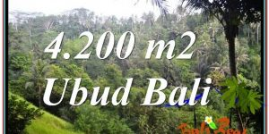 Exotic 4,200 m2 LAND IN UBUD FOR SALE TJUB639