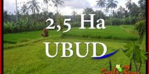 Magnificent PROPERTY UBUD PAYANGAN 2,5 Ha LAND FOR SALE TJUB655