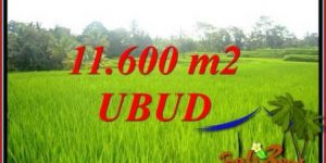 Affordable Property Ubud Tegalalang 11,600 m2 Land for sale TJUB732