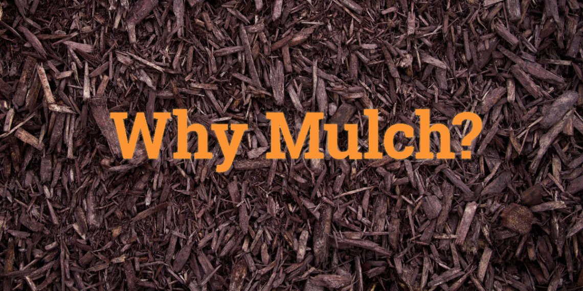 Why do you need mulch?