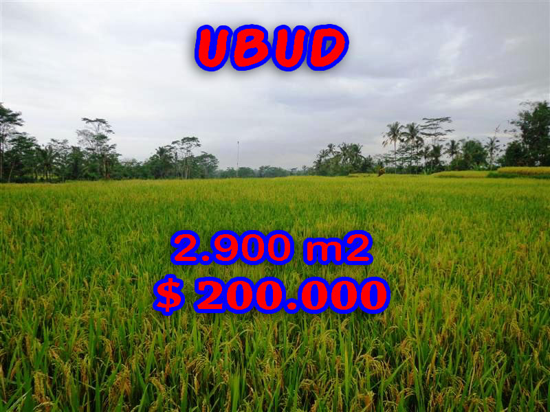 Property in Bali for sale, Spectacular land for sale in Ubud Bali  – 2.900 sqm @ $ 69