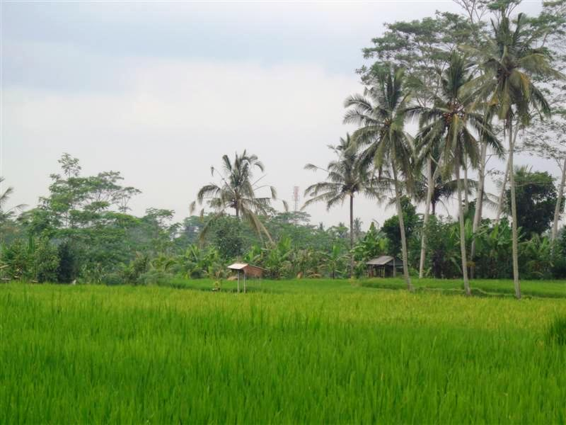 Bali Land for sale 1.700 sqm in Ubud Tegalalang