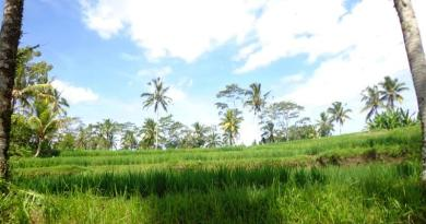 Land for sae in Ubud Tegalalang