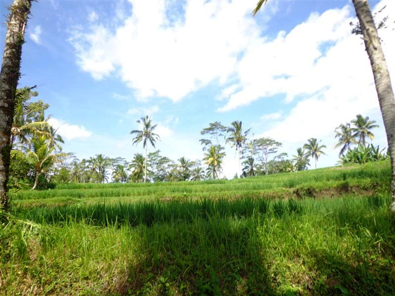 Ubud Land for sale Rice Paddy and River View in Ubud Tegalalang Bali