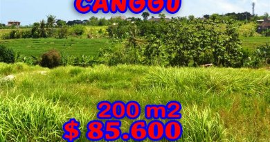 Land-for-sale-in-Canggu-Bali