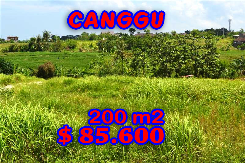 Stunning Land for sale in Bali, Rice fields view in Canggu Bali - TJCG099