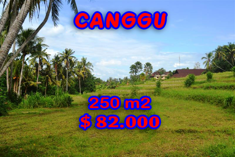Property in Bali for sale, Spectacular land for sale in Canggu Bali  – 250 sqm @ $ 328
