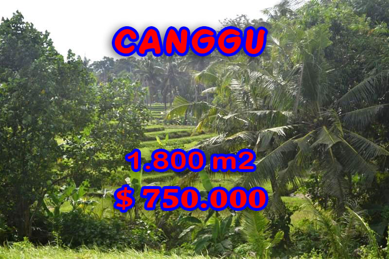 Land for sale in Bali, exotic view in Canggu Berawa Bali – TJCG111