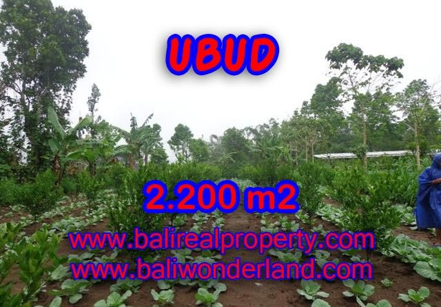 Magnificent Land for sale in Bali, rice paddy view in Ubud Tegalalang Bali – TJUB348