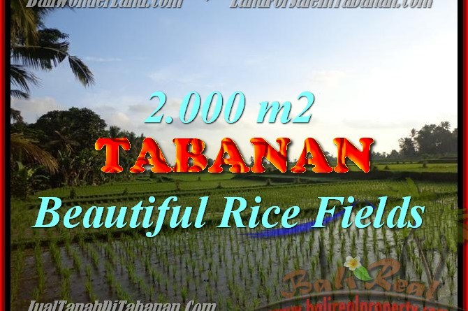Beautiful Property for sale in Bali, land for sale in Tabanan – TJTB151
