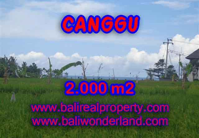 Stunning Land for sale in Bali, Rice fields view closed to the beach in Canggu Bali - TJCG140