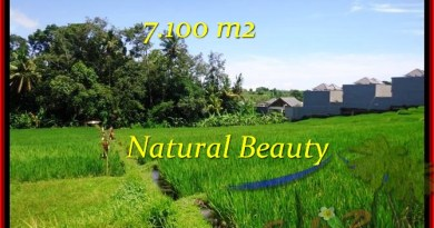 FOR SALE Beautiful LAND IN Tabanan Tanah Lot BALI TJTB197