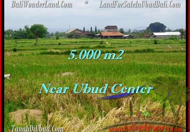 5,000 m2 LAND IN UBUD FOR SALE TJUB474