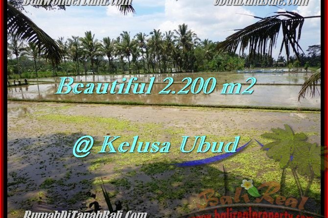 Beautiful 2,200 m2 LAND FOR SALE IN UBUD BALI TJUB475