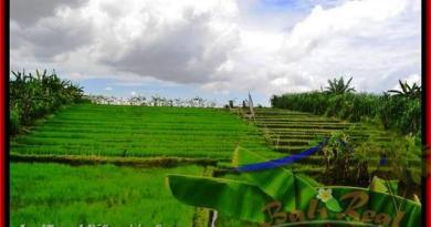 Beautiful PROPERTY LAND IN Canggu Pererenan BALI FOR SALE TJCG141