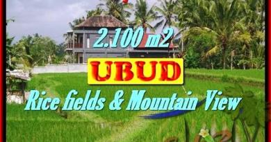 Exotic PROPERTY 2,100 m2 LAND SALE IN UBUD BALI TJUB423