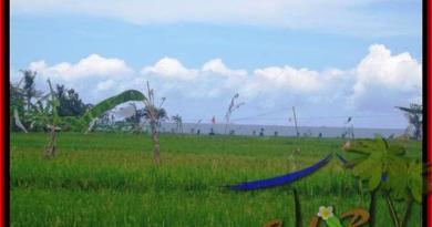 Magnificent LAND IN Canggu Cemagi BALI FOR SALE TJCG140
