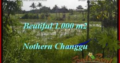 Beautiful 1,000 m2 LAND IN CANGGU FOR SALE TJCG180