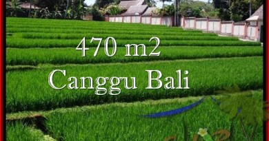 FOR SALE Beautiful LAND IN Canggu Pererenan TJCG187