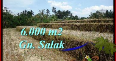 FOR SALE 6,000 m2 LAND IN TABANAN TJTB221