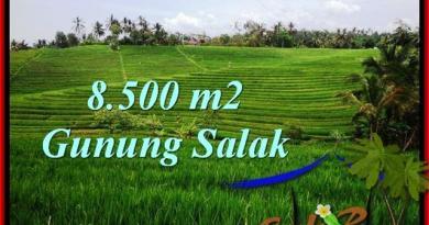 Beautiful LAND FOR SALE IN TABANAN TJTB223